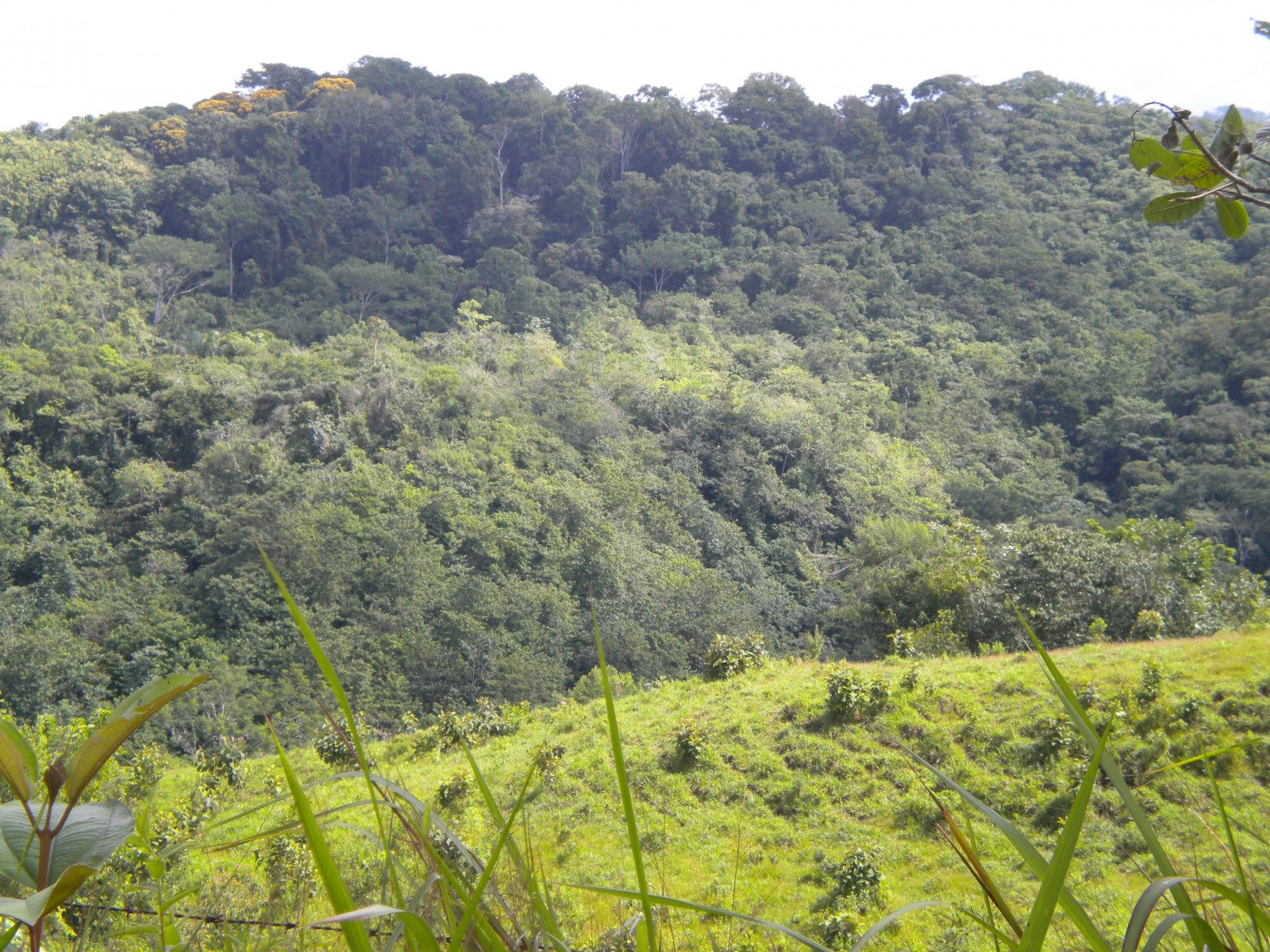 //costaricasol.com/images/jux_real_estate/realties/34/img797_mPFMdv.jpg